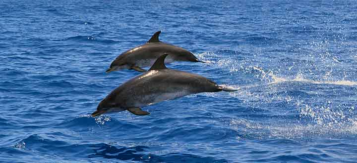 Take a whale and dolphin boat trip in Tenerife