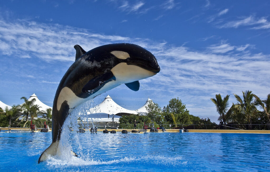 Tenerife's Loro Parque water park and zoo