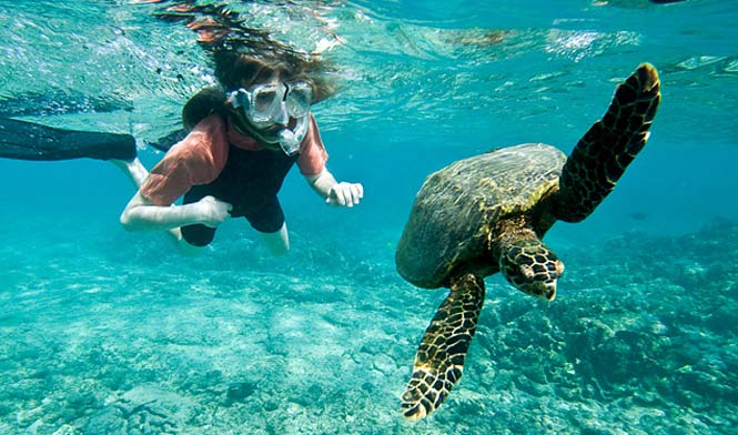 snorkeling with giant turtles during a whale and dolphin boat trip on Tenerife